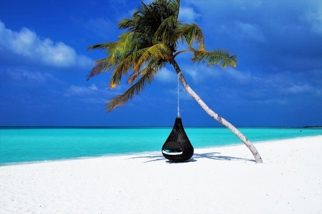 maldives, palm tree, hammock
